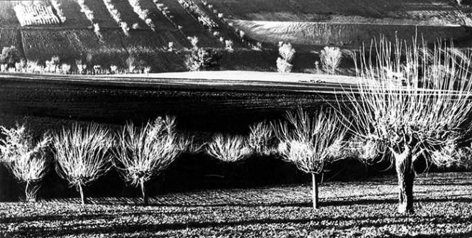 iw-mario-giacomelli-paesaggio-agricolo-02-665x335
